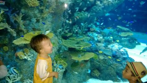 B first visited the SEA aquarium in Aug 2013